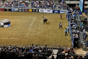 Hundreds of people gather at the Hampton Coliseum Saturday evening to watch as bull riders compete in the Pro Bull Riders Blue DEF Velocity Tour. (Jonathon Gruenke/Daily Press)