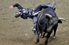 Gage Gay hangs onto bull, Freaks Yet, while competing in the Pro Bull Riders Blue DEF Velocity Tour at the Hampton Coliseum Saturday evening. (Jonathon Gruenke/Daily Press)