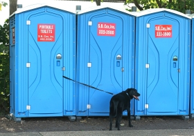 --Feature HM: Kevin Morley/Richmond Times-Dispatch--A dog waits for its human during the Fido Fest canine event on Brown's Island, Sept. 21, 2014.