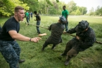 Midshipman 2nd-class Zach Coffman, of Charlottesville, Va., encourages plebes during the tug-of-war at the annual Sea Trials exercise at the U.S. Naval Academy in Annapolis, Md., on Tuesday, May 12, 2015. The event, modeled after the Marine Corps' Crucible and Navy's Battle Stations events, runs over 14 hours and tests the plebes' physical and mental endurance.