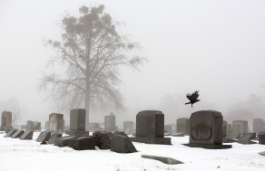 3rd PLACE PICTORIAL: Bill Tiernan, Virginian-Pilot---A crow flies thru the fog shrouded Forest Lawn Cemetery Sunday morning, February 22, 2015. Last week's snow began to melt as temperatures rose to the low 50's Sunday afternoon.