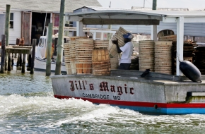 A watermen aboard Jill's Magic from Cambridge, MD organizes wooden barrels as the boat rides through Tangier Island on Wednesday, Aug. 10, 2016.