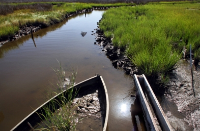 Marsh grass grows through a sunken boat near the beaches of Tangier Island on Thursday, Aug. 1. Rapidly eroding shoreline, climate change and a rising sea level puts the island at risk to be completely underwater within the next 50 years forcing locals to abandon their way of life.