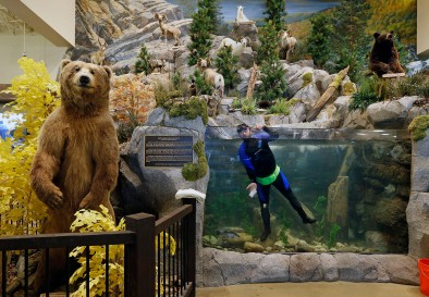 1st Place Environment: P. Kevin Morley, Richmond Times-Dispatch--Robert Michael cleans the large aquarium at Cabela's, in the North American Big Game Display in the new outdoor gear and hunting supply retailer set to open April 6. March 22, 2016