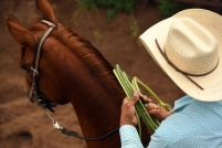 A participant in the Team Roping event prepares to compete at the Carbondale Wild West Rodeo on Thursday July 20, 2017 in Carbondale, CO. The weekly rodeo is in it's 13th year at it's current location. It runs from June to mid-August.