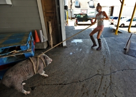 First Hand Stasia Hudson, pulls Pig while waiting for the boat to be unloaded at L D Amory & Company fish market. Wednesday, June 21, 2017.