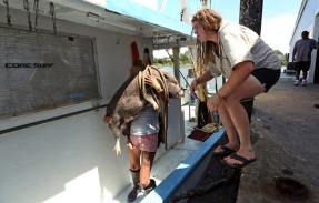 First Hand Stasia Hudson, left, lifts Pig into the boat with the help of shipmate Samantha Huff, right, while their catch was unloaded and processed at L D Amory & Company fish market in Hampton. Wednesday, June 21, 2017.