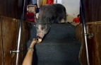 From below in the sleeping quarters, Stasia Hudson feeds a Ritz cracker to Pig while docked at the L D Amory & Company fish market in downtown Hampton.