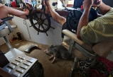 Samantha Huff, left, and Captain Todd Beland, right, take a break as Pig, the potbellied pig, sleeps underneath the ship's wheel which docked in downtown Hampton on Wednesday, June 21, 2017.