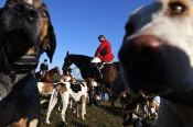 Huntsman, Charles Montgomery is surrounded by dogs for the blessing of the hounds as participants gather for a fox hunt organized by the Bull Run Hunt Club on Sunday October 22, 2017 outside of Locust Dale, VA. It was their opening meet for the season.